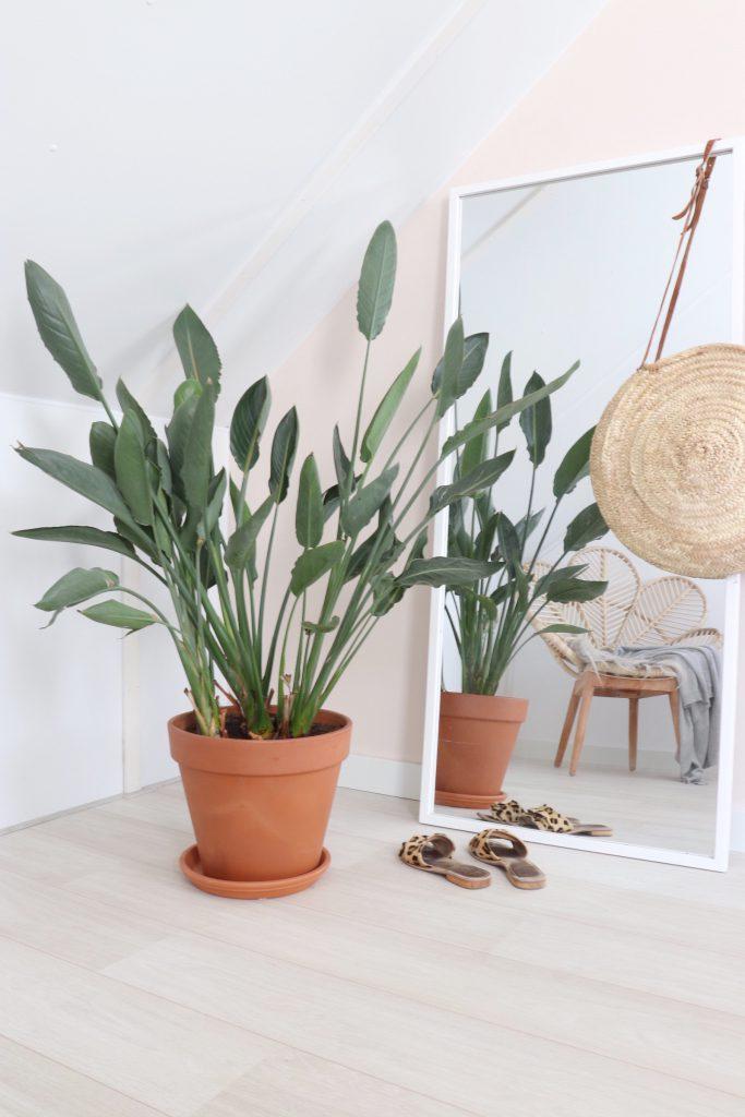 Makkelijke planten in huis: 5 tips!